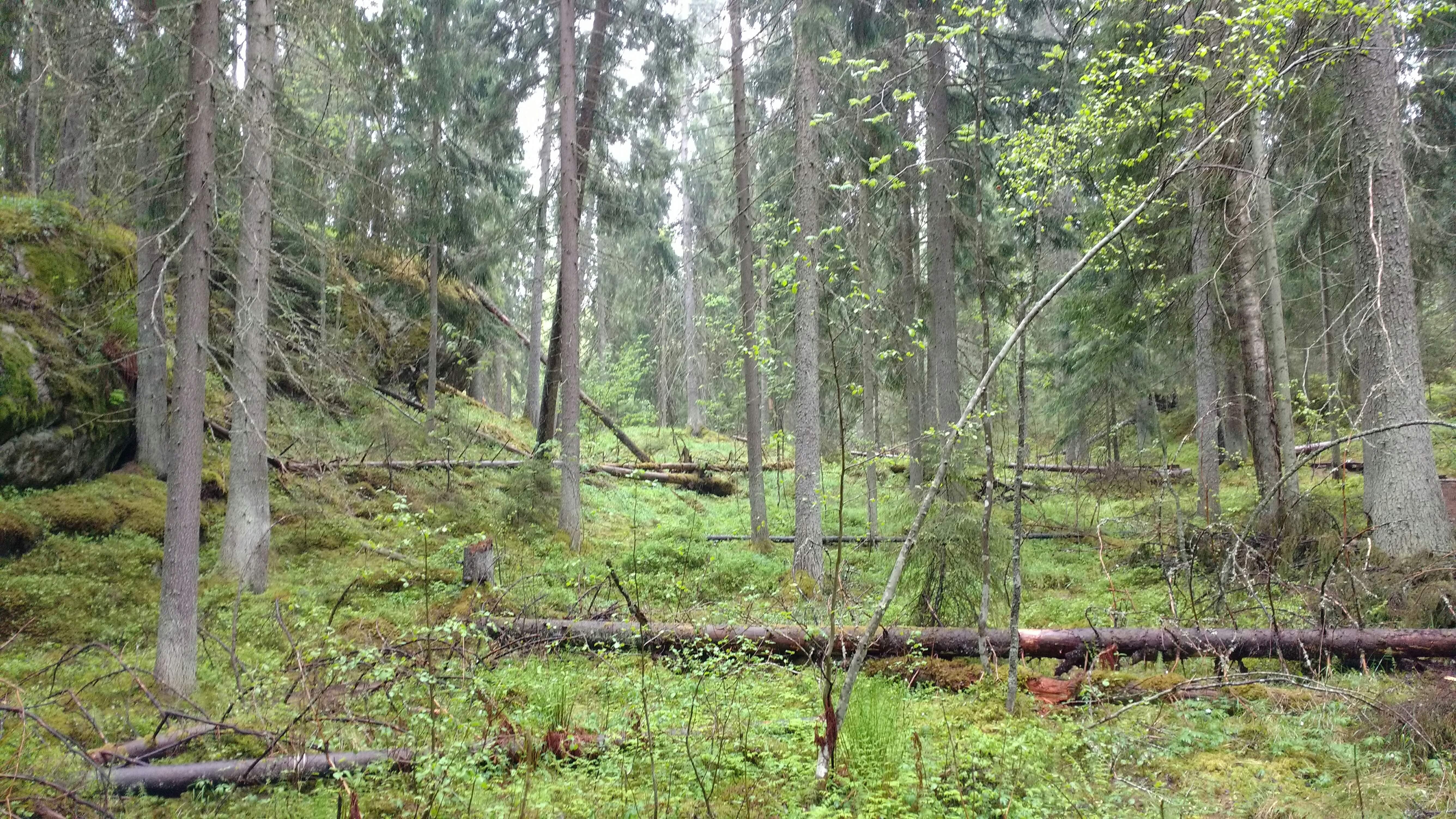 Karnaistenkorpi. Kuva Lohjan ympäristönsuojelu.
