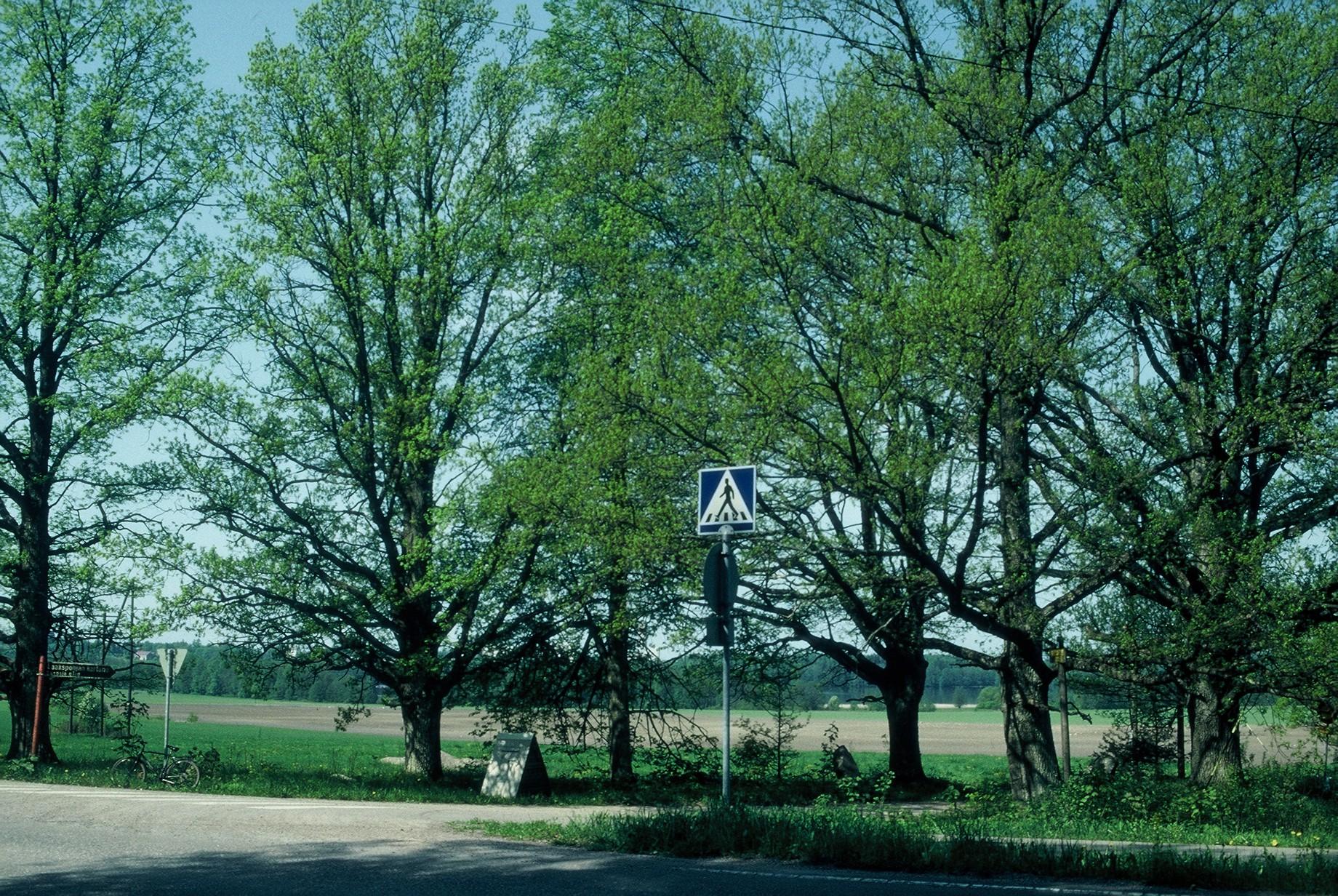 Luonnonmuistomerkki, tammiryhmä, Laakspohja, kuva Lohjan ympäristönsuojelu.
