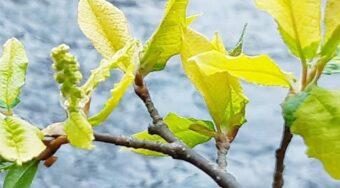 Puun lehtiä sinistä taustaa vasten
